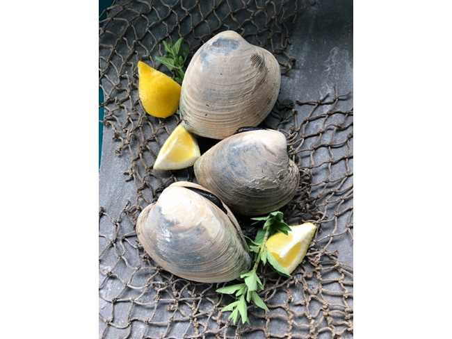Chowder Clams - 10 lb. bag