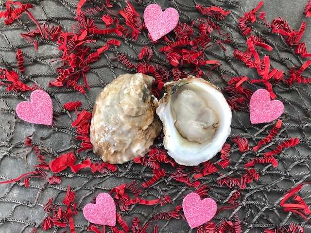 First Kiss Oyster - 100 Count