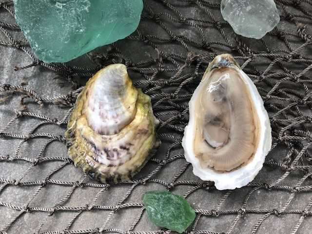 Harbor Wild Oyster - 100 count