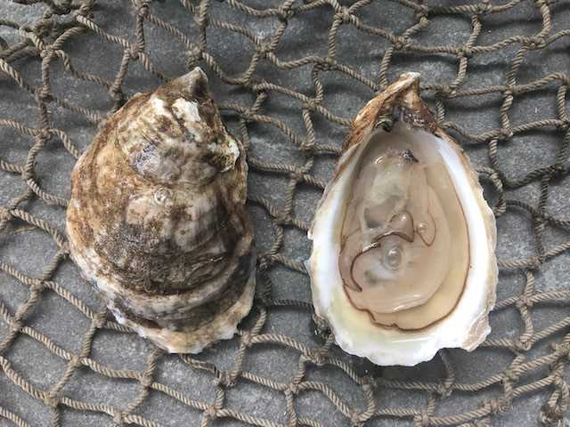 Raspberry Point Oyster 25 count