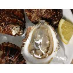 Umami Oyster™ 25ct